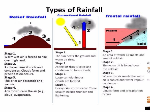 introduction to rain Introduction rainforests nearest to the equator, where the climate is very hot and wet all through the year, are evergreen because the trees can grow all of the time and so are always in leaf.