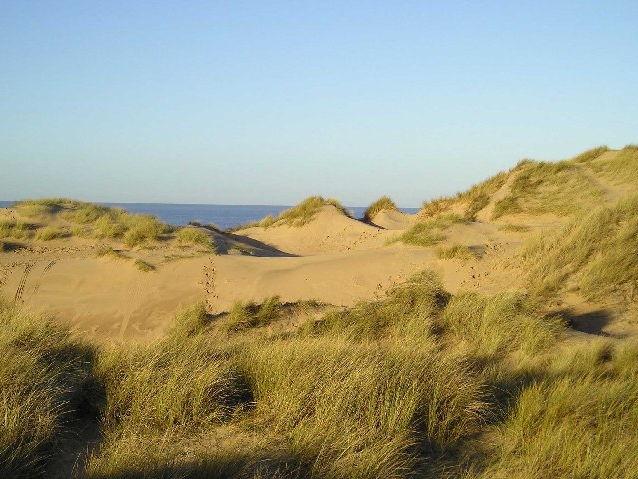 Sand Dune Species