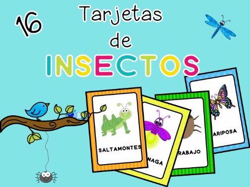 Insectos - tarjetas de vocabulario -