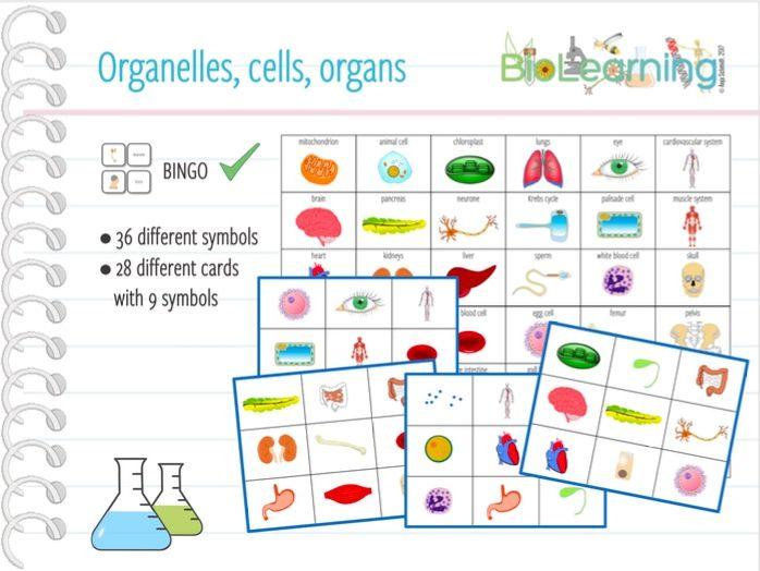 Organelles, cells, organs - Bingo Cards