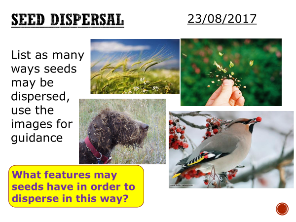 Seed dispersal - complete lesson (KS3)