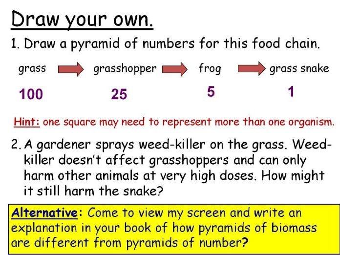 Transfers in Food Chains (Pyramids of Numbers) Year 7 Lesson PowerPoint (KS3 7De) Ecosystems