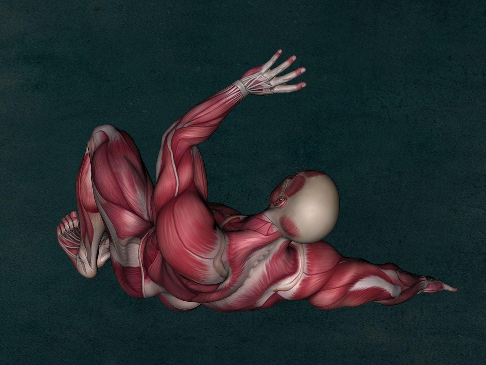 IGCSE PE (spec 2018) Muscular System