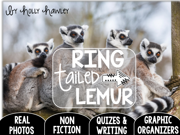 Ring Tailed Lemur-A Research Project-UK Version