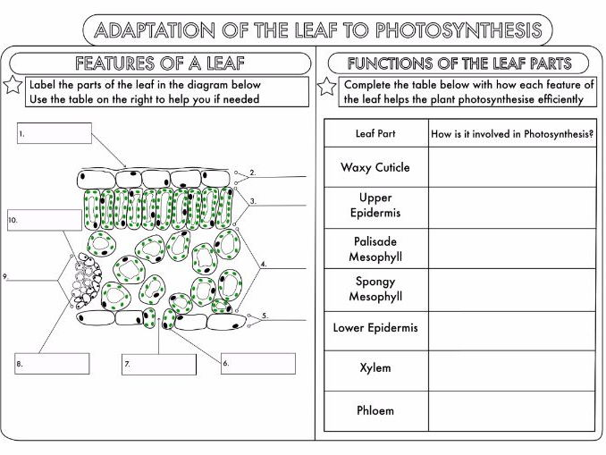 GCSE Photosynthesis Topic Worksheets by beckystoke - Teaching ...