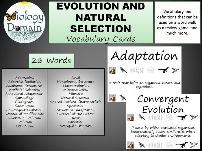 Evolution and Natural Selection Vocabulary Cards