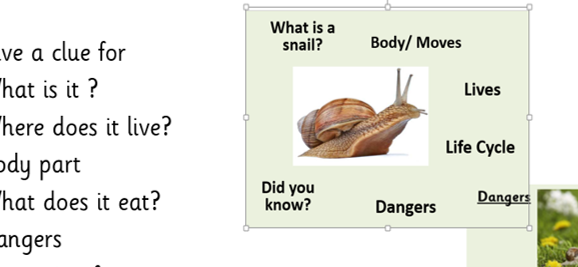 Year 2  Riddles snails and whales