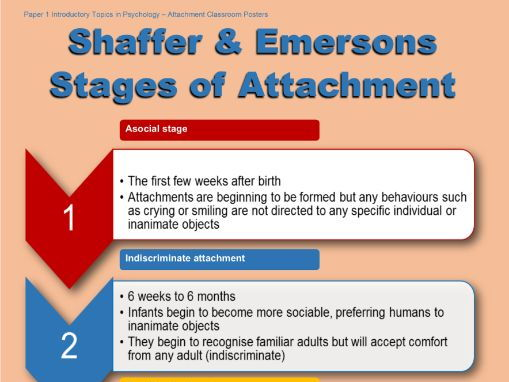 Poster - Shaffer & Emerson's Stages of Attachment
