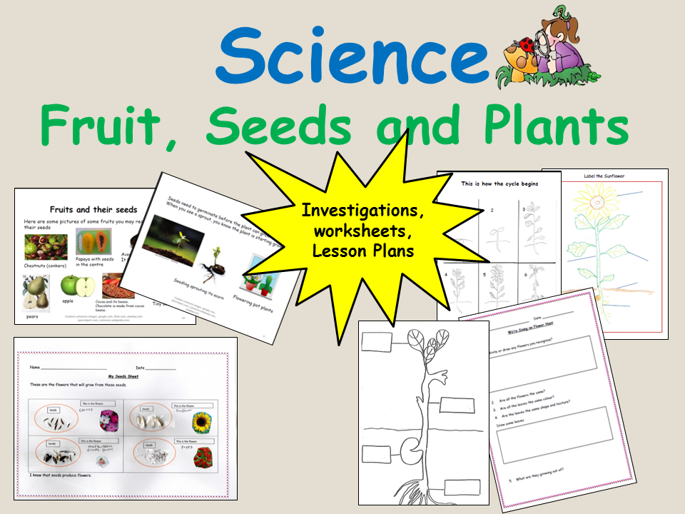 Plants that flower and  Life Cycle of a Sunflower and bean plant - Reception/Keystage 1 Science