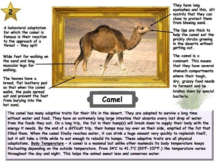 Desert animal & plant adaptations lesson AQA GCSE