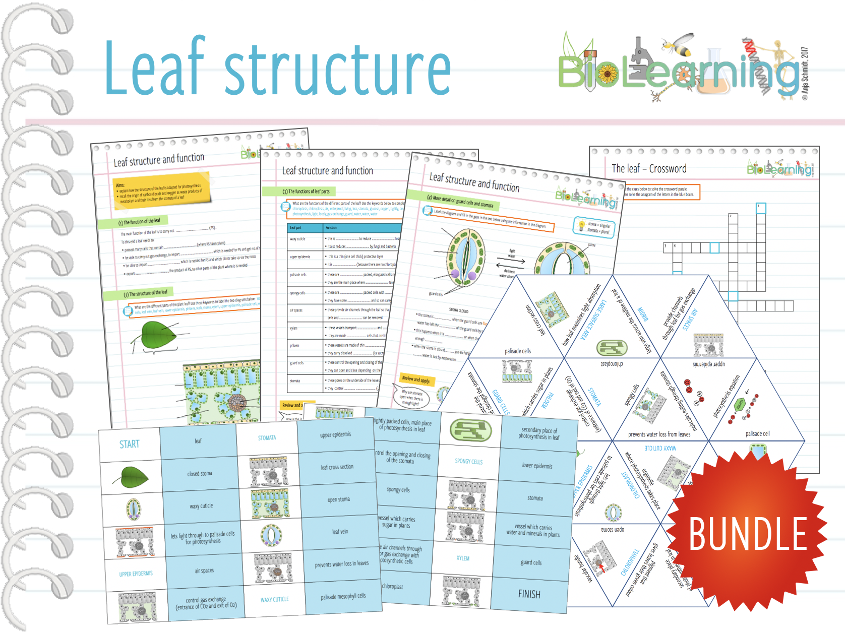 Leaf structure - 4x Activities and Games (KS3/4)