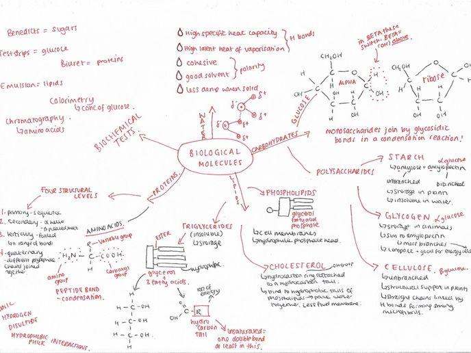 OCR Biology A-Level Revision