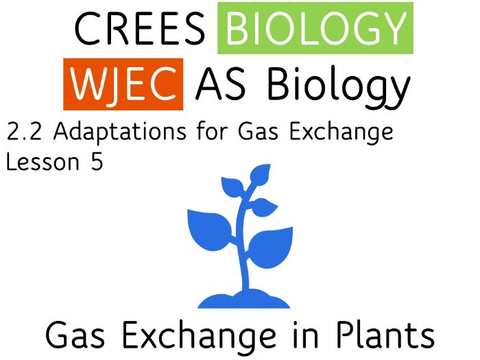 2.2 Lesson 5 Gas Exchange in Plants