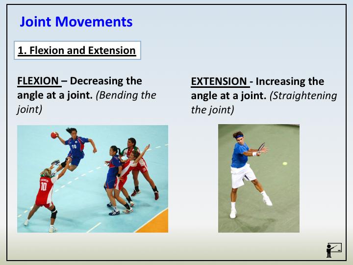 GCSE PE (Edexcel) - C1;T1.1.5 - Synovial Joints & Movement