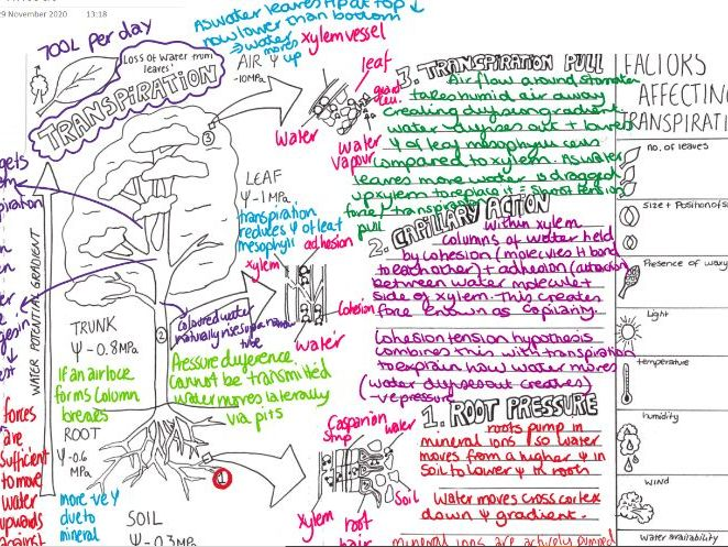 Transport in plants Transpiration A3 summary sheet with model answers Alevel OCR A