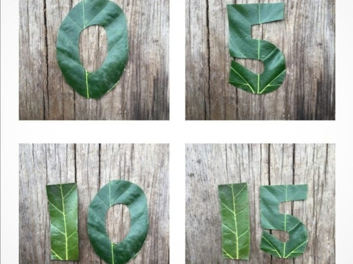 Leaf numbers in fives and tens