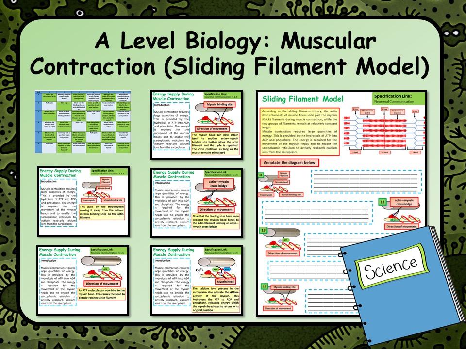 A Level Biology Sliding Filament Model Lesson