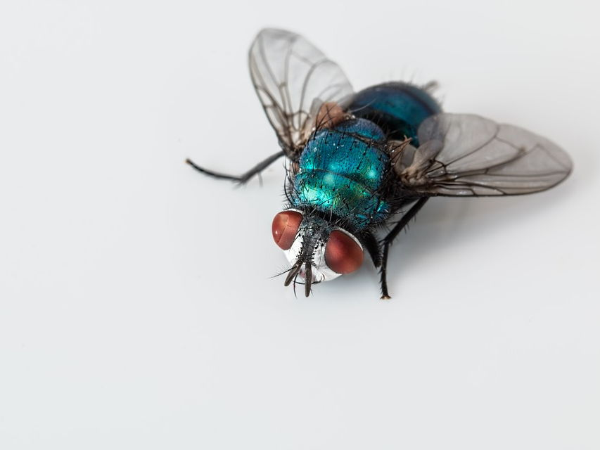 GCSE SOW - Insects