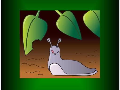 'I am a slug!' A Mini Beast Song