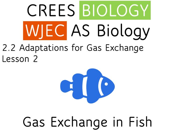 2.2 Lesson 2 Gas Exchange in Fish