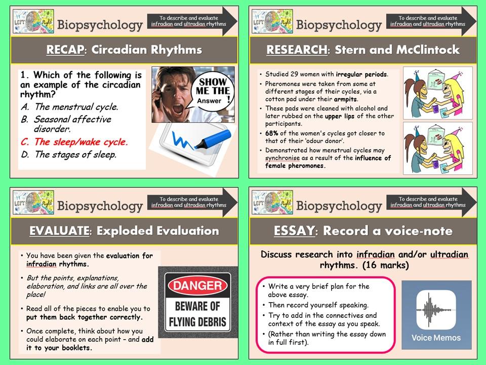 AQA A-level Psychology Biopsychology - Infradian and Ultradian Rhythms