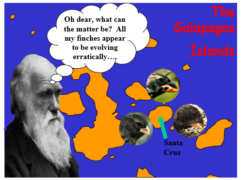 Natural Selection and Darwin's Finches