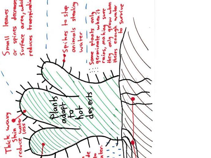 Geography Living World Mind Maps GCSE 9-1