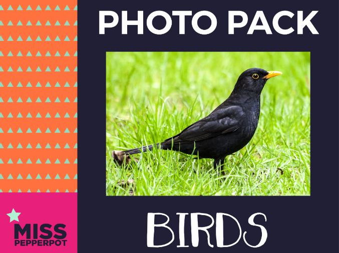 Bird Photo Resource Pack