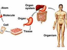 KS3 Biology Cells Tissues and Organs