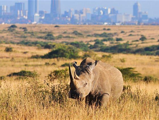 Mini Kenya Case Study EAL SOW