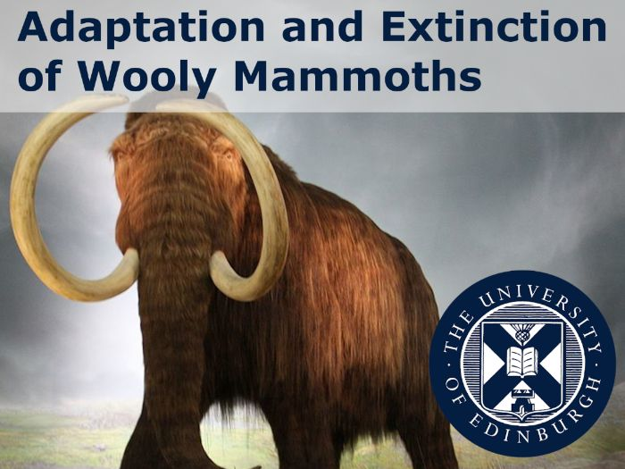 Adaptation and extinction of woolly mammoths