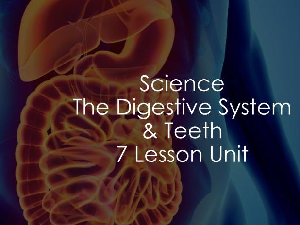 KS2 Science - The Digestive System and Teeth