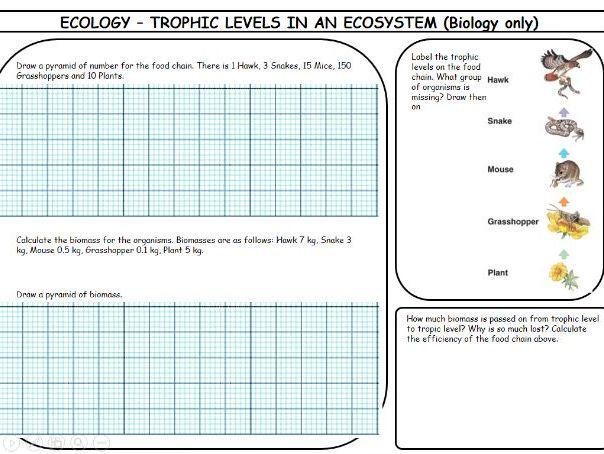 New Spec AQA GCSE Biology 4.7 Ecology Revision pack