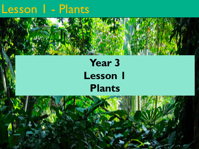 Year 3 - Science - Lesson 1 - Plants (PDF Version)