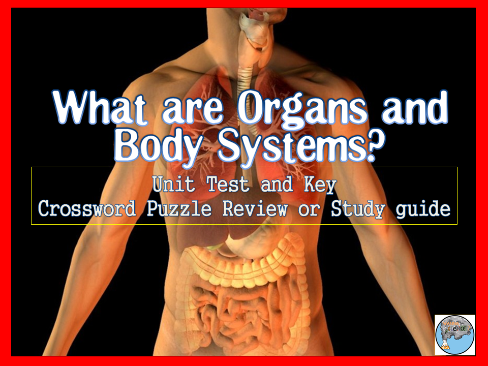 Human Body (Organ and Organ Function)Test and Review Cross Word Puzzle