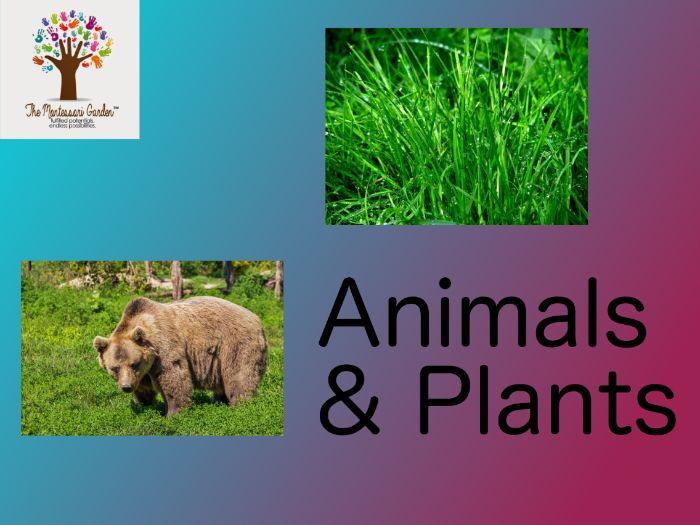 Montessori Classification: Plants and Animals