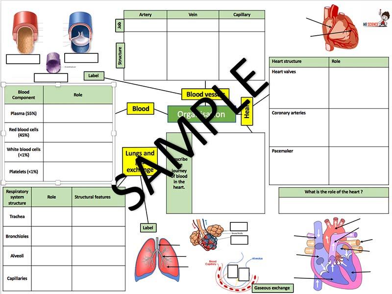 AQA Organisation part 2 revision mat