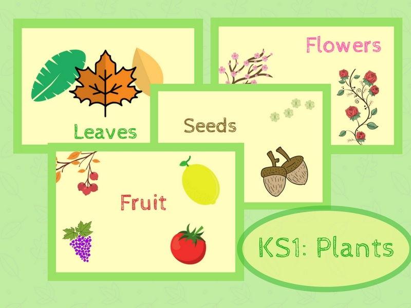 KS1 Science: Plants. Classroom Display