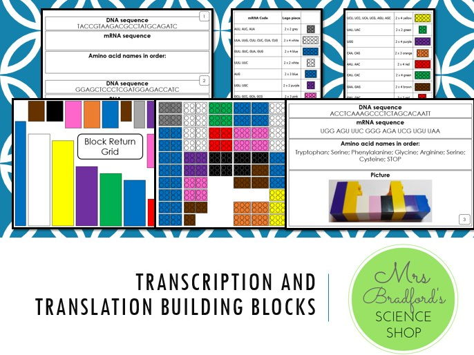 Transcription and Translation Building Blocks Activity