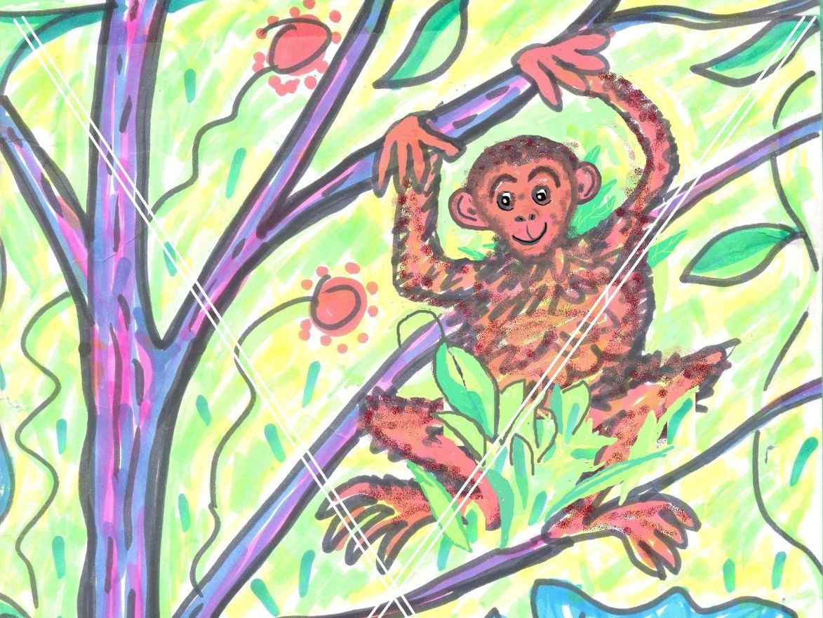 Jungle Bundle - 7 creative writing + colouring frames + 2 display pics