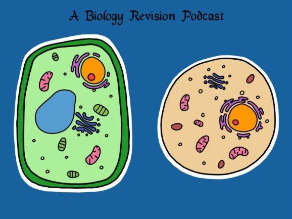 Cells (IGCSE/ GCSE) worksheet