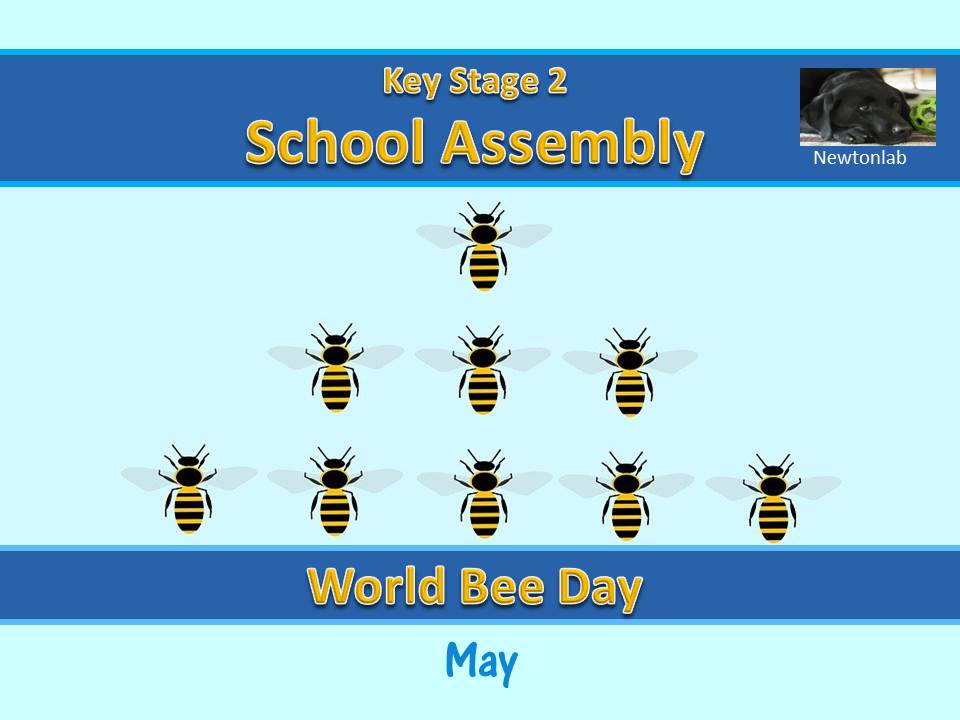 World Bee Day Assembly - 20th May 2021 - Key Stage 2