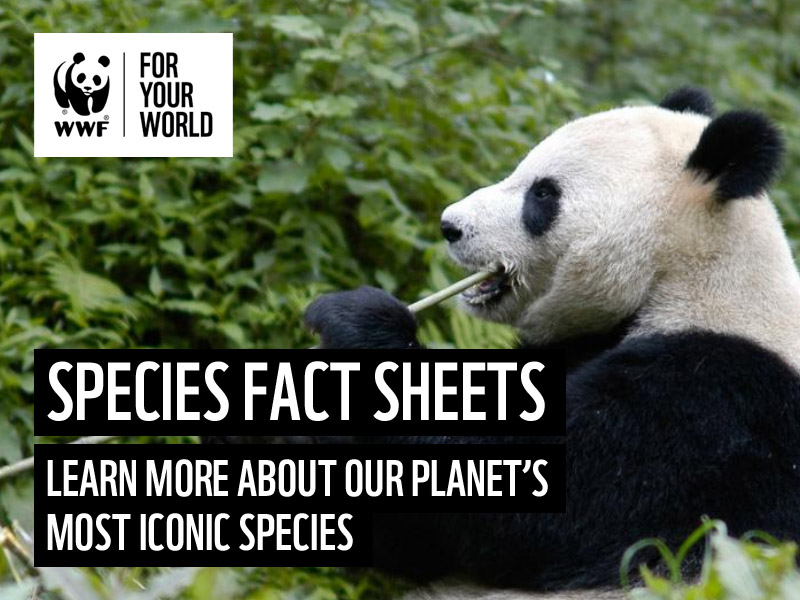 WWF Animal Facts and Information Sheets