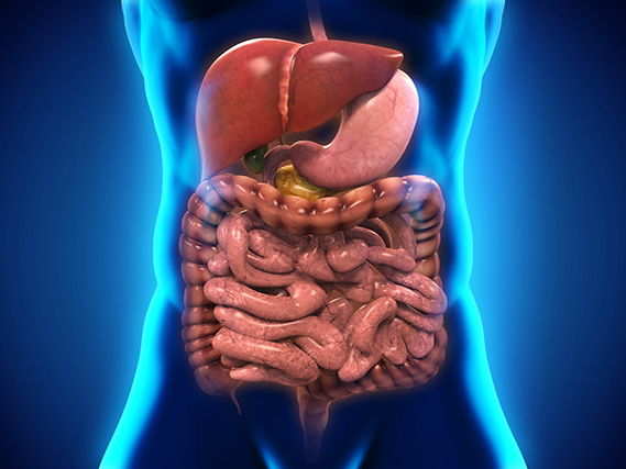 BTEC Applied Science 2016 Unit 8 Aim C, Digestive System -Physiology of Human Body Systems,