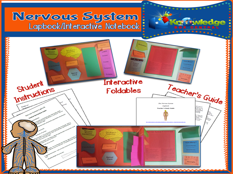 Nervous System Lapbook By Knowledgeboxcentral Teaching Resources Tes