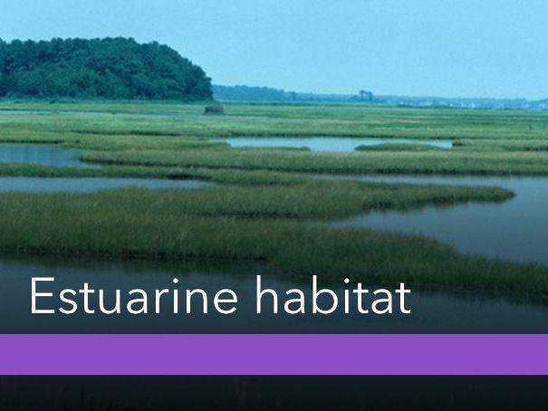 Aquatic Habitat - Estuarine