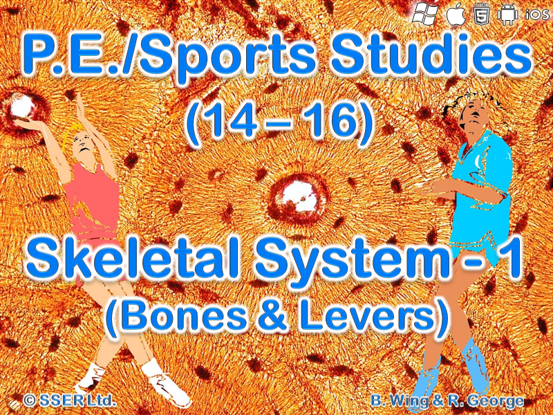 PE12STa - Skeletal System - 1 (Bones and Levers)