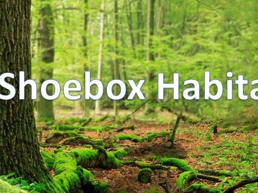 Habitats - Make a shoebox habitat