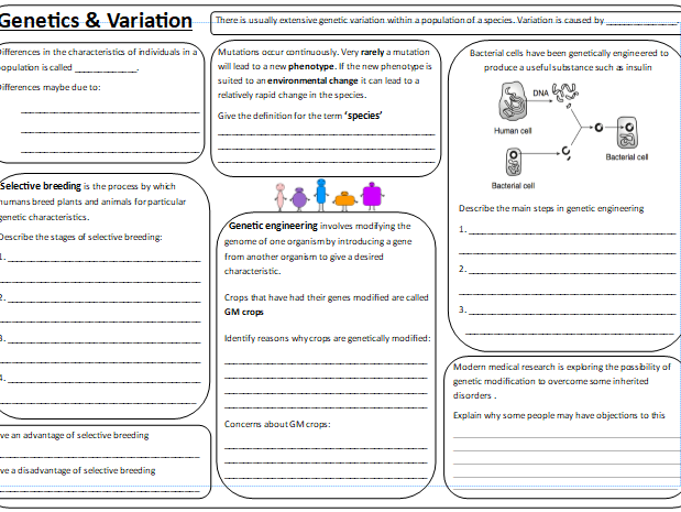AQA Trilogy Combined Biology P2 Revision Sheets - Higher