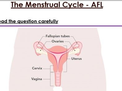 KS3 The Menstrual Cycle 6 mark exam question